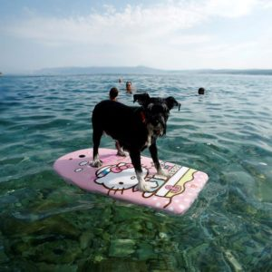 DOG BEACH Crikvenica