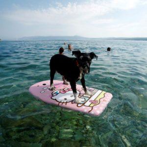 DOG BEACH Crikvenica